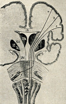 Upper motor neurons